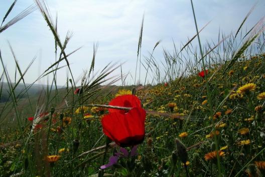 Bloemen in maart in de Besorvallei in de Negev.