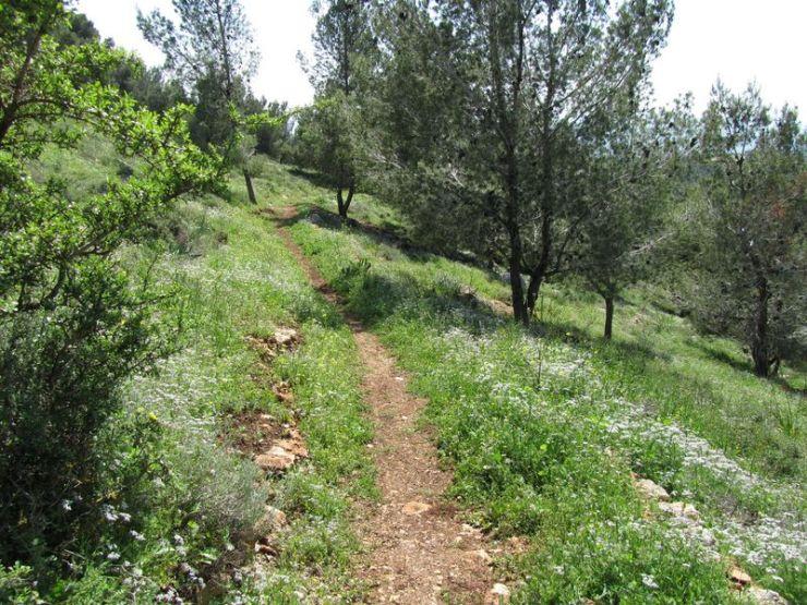 De Gospel Trail op de Berg van de Afgrond in Nazareth. Foto: Alfred Muller