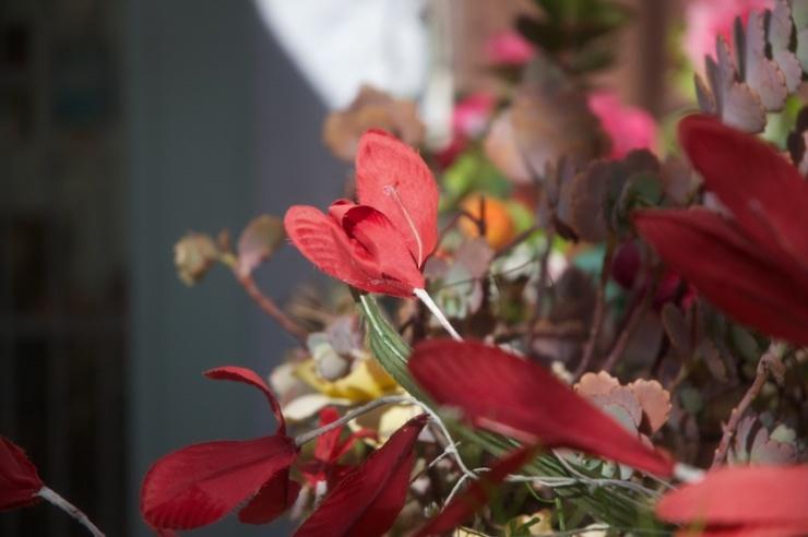Bloemen in de huiskamer.