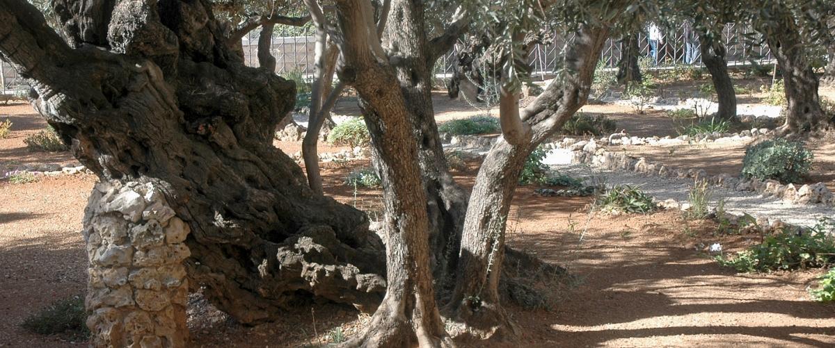 Gethsémané