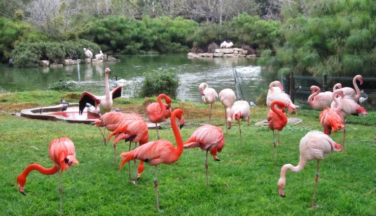 Een tuin met flamingo's. Alle foto: © Alfred Muller