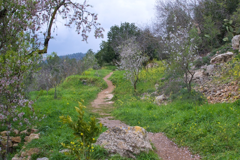 In het natuurgebied bij Ein Kerem tijdens het einde van de winter.