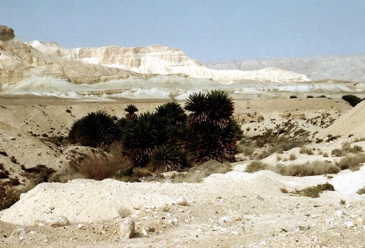 980330a Ein Ziq oase in Negev