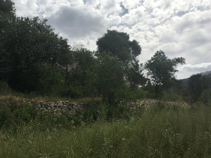 Een vruchtbaar gebied bij Motza. Foto, Gina Damen. IMG_4109