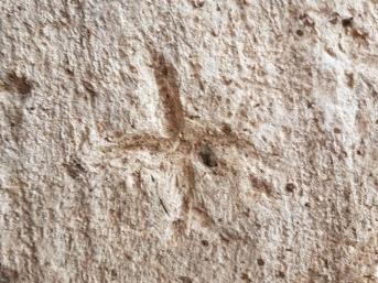 Afbeelding van een kruis in een muur. Foto: Gilad Itach, IAA